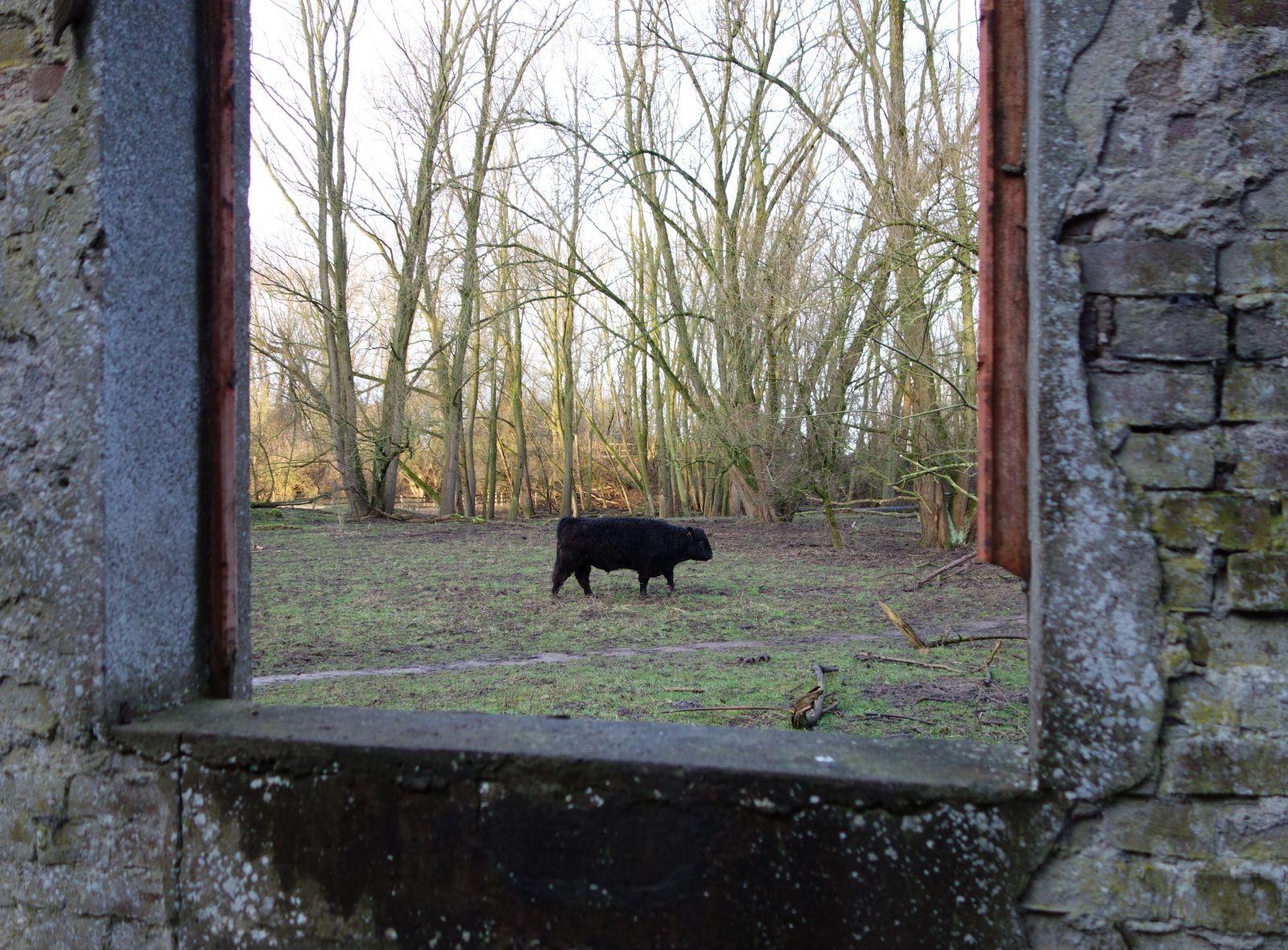 Aafke steenhuis blog - Ondergrondse kamer ...